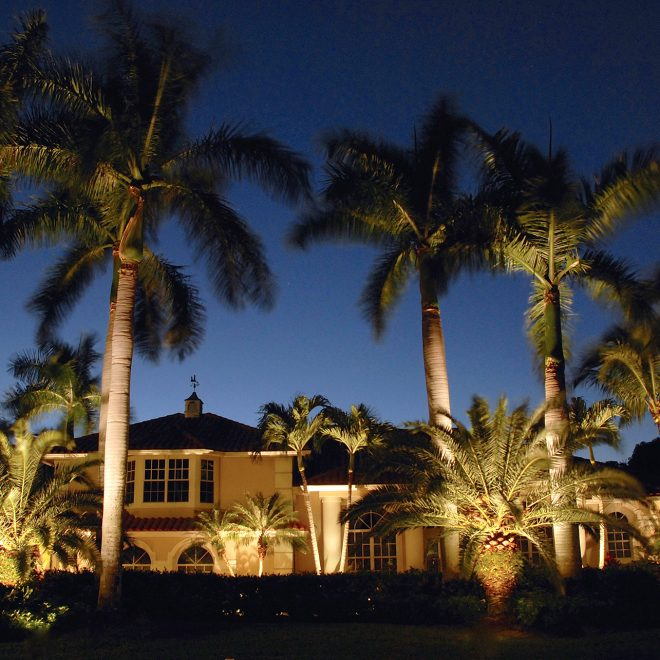 FX Palm Tree Lights