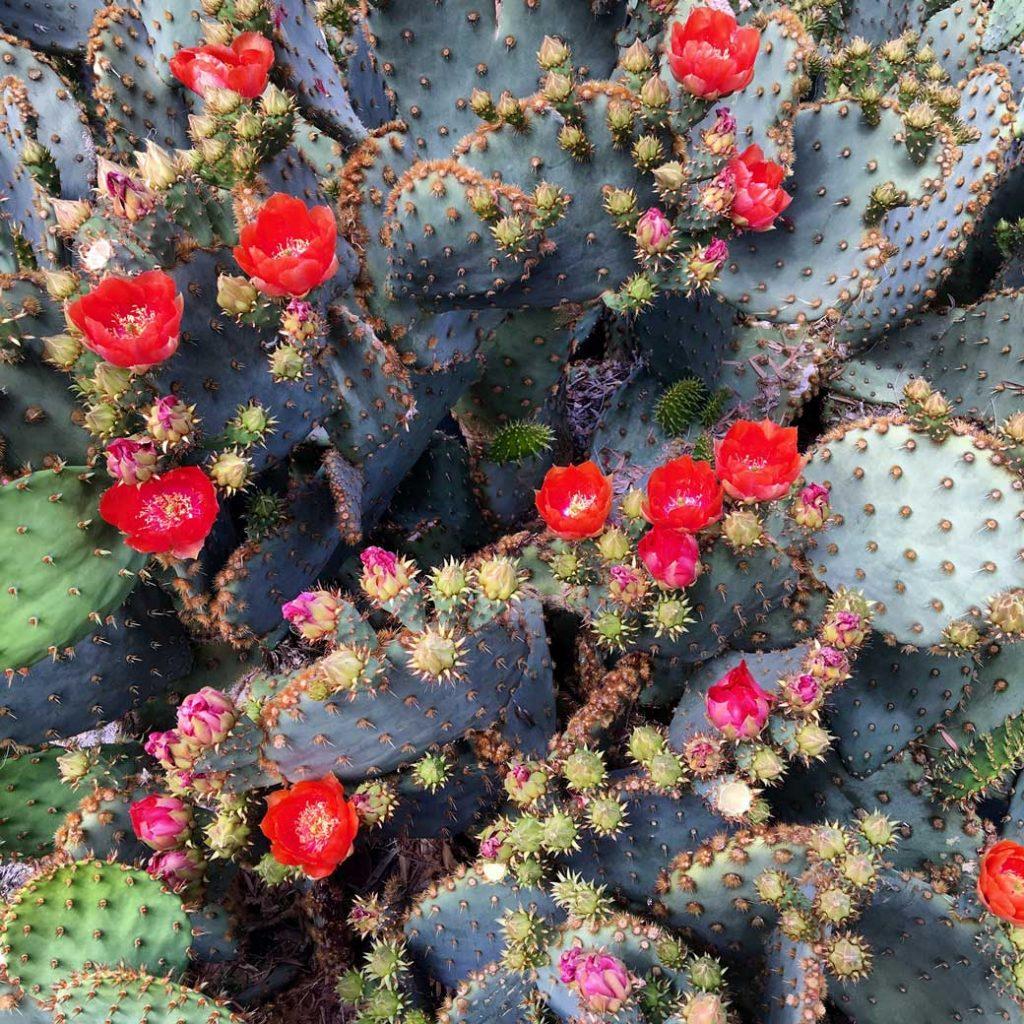 21-Cactus-Plants