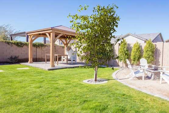 50-Tree-in-Yard